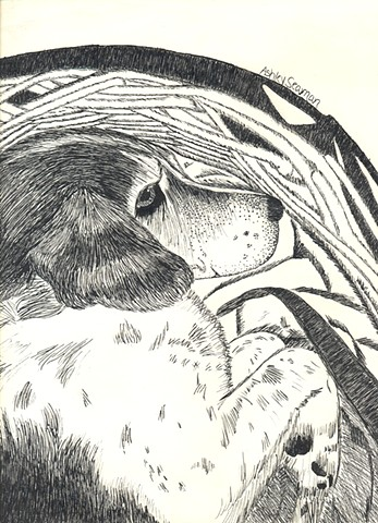 dog portrait ink drawing by ashley seaman
