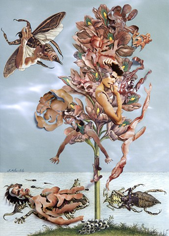 Dominique Paul, Merian, Insects of Surinam, photography
