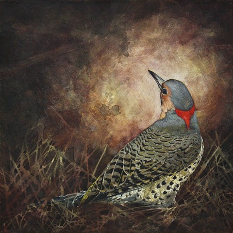 Northern Flicker woodpecker bird art painting