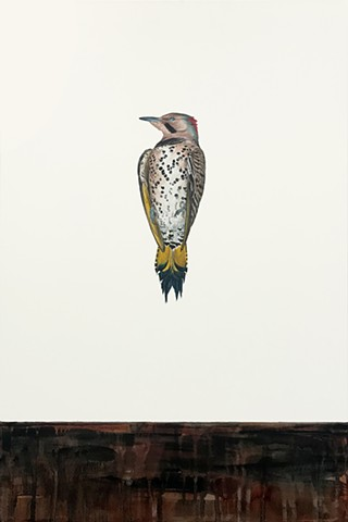 northern flicker, bird, watercolor, bird art