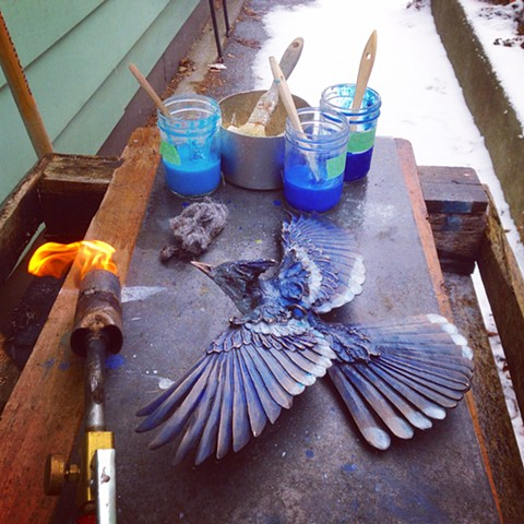 A bronze jay turning blue