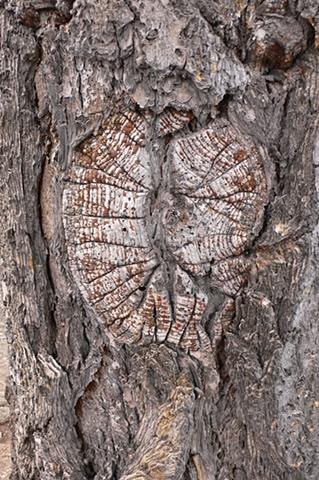 Tree Bark #2