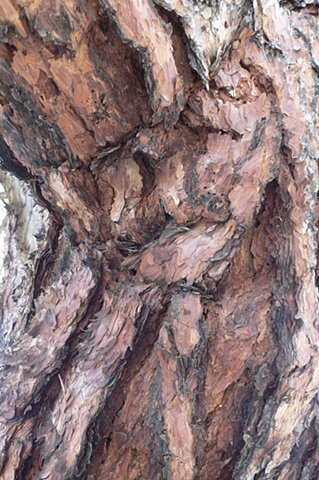 Tree Bark #3