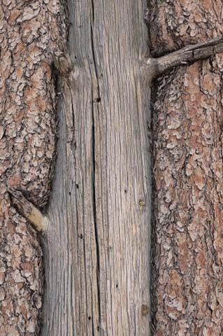Tree Bark #5