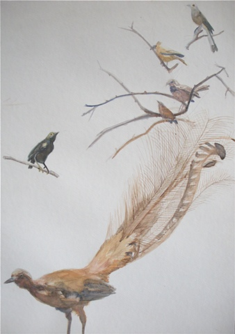 superb lyre bird... cactus wren...velvet asity...  Currently on display