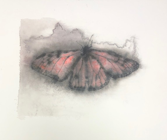 Monarch butterfly, ink transfer