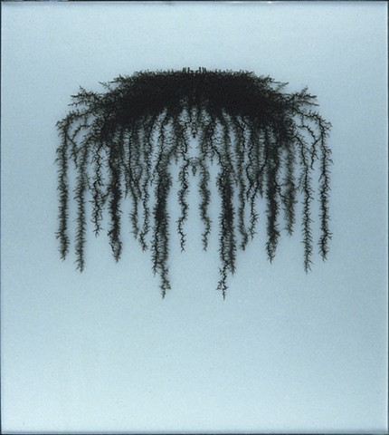 roots, transparencies, botanical, Laurie Rousseau, constructions