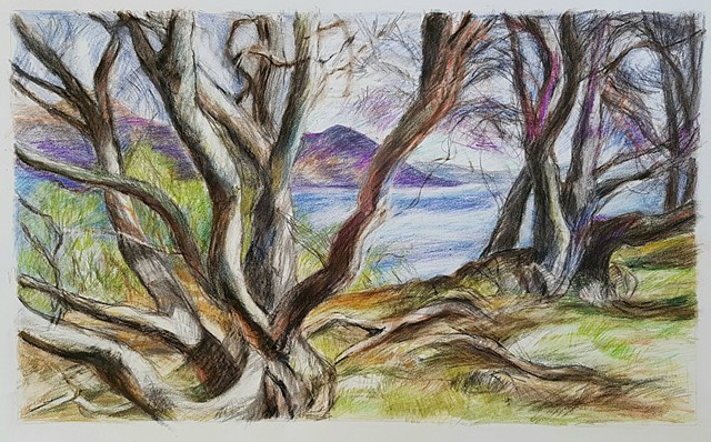 Trees on Little Loch Broom
