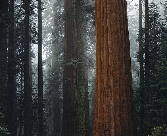 Inside Sequoia National Park