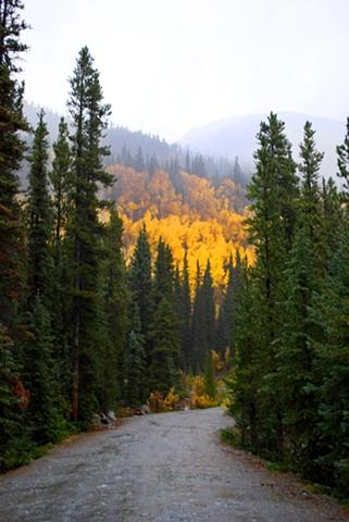 Colorado Fall #1