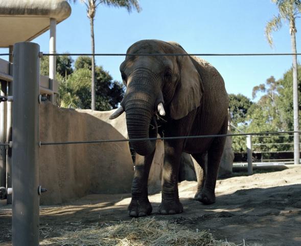 Elephant, San Diego