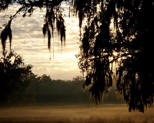 Florida Mist