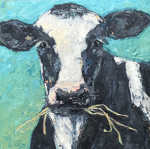 Black and white cow on blue chewing straw