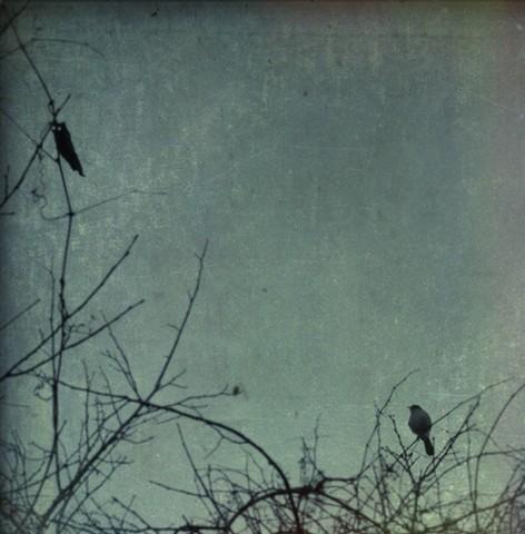 winter dawning