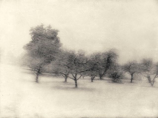 through winter's woods