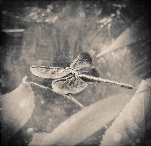 jeweled wings