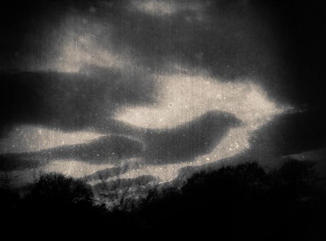 bird signs in the sky