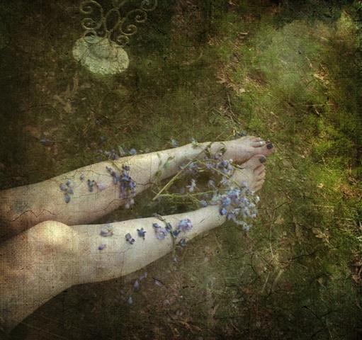 wisteria, my favorite