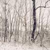 winter's bones