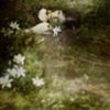 sabbath lily goes home