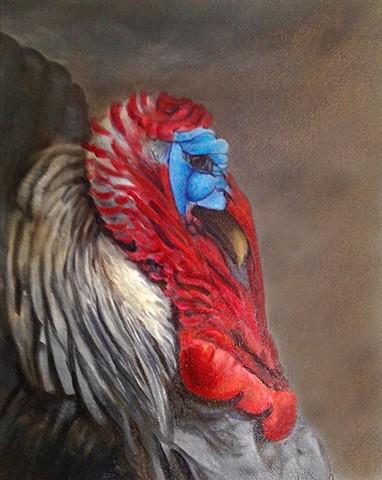 Study of a male turkey