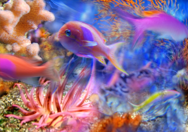 Digital photographs taken in aquaria, composed in photoshop