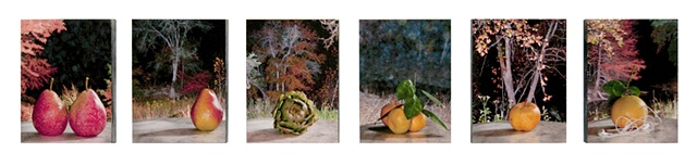 A series of 6 photos mounted on Ampersand board, then highly varnished