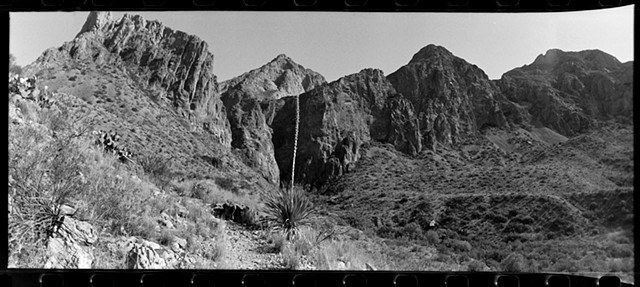 sotol at Big Bend National Park