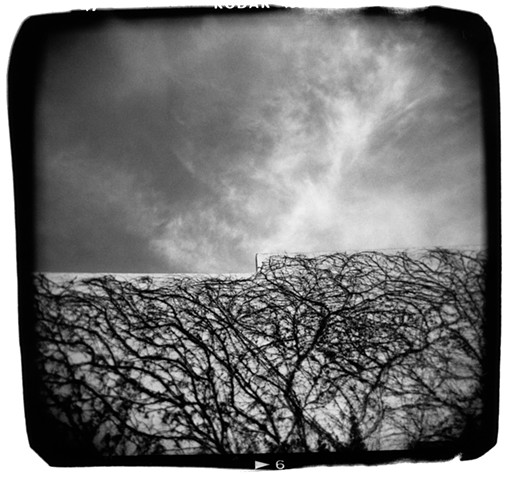 Sky and Vines – Alpine, Texas
