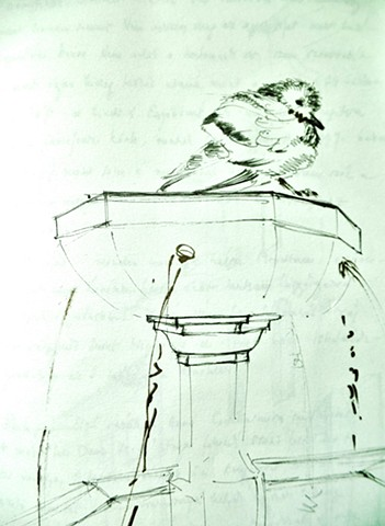 pigeon intimidé