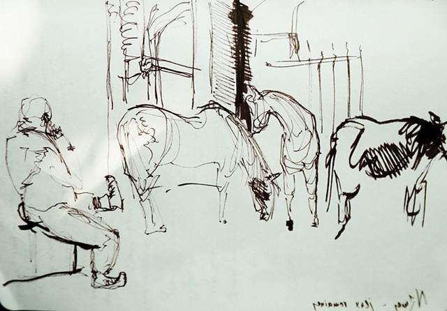 Nîmes, chevaux