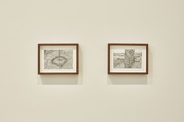 L to R, Untitled (Derek Jarman's Garden 1), Untitled (Derek Jarman's Garden 2)