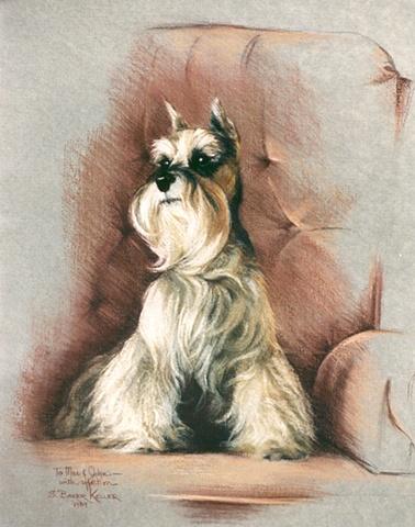 Pastel Portrait of a Miniature Schnauzer by Sally Baker Keller