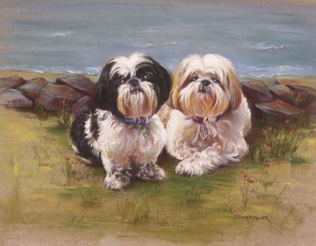 Pastel Portrait of Two Shih Tzu Dogs by Sally Baker Keller