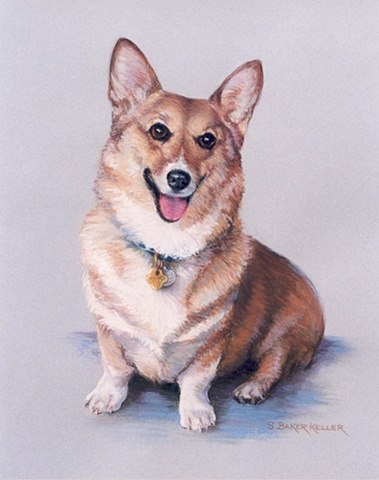Pastel Portrait of a Corgi by Sally Baker Keller