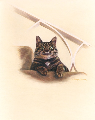 Pastel Portrait of a Cat by Sally Baker Keller