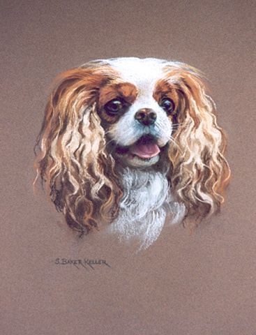 Pastel Portrait of a Cavalier King Charles Spaniel by Sally Baker Keller