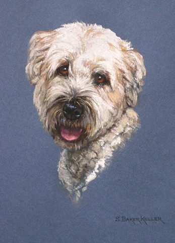 Pastel Portrait of a Soft Coated Wheaten Terrier by Sally Baker Keller