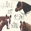 """""""Horse Composition"""""""