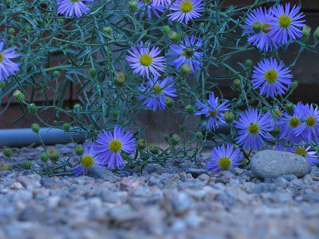digital print, photography, New Mexico Scenery, Hank Lerma Images.com,nature, insects,bugs, flowers