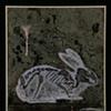 Bunny #18