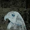 Hawk #3