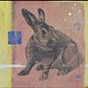 Rabbit Transfer