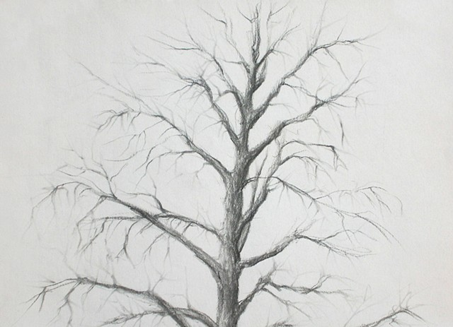 graphite drawing by artist Karen S Purdy