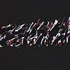 Signature Series (Open Dance Magenta)