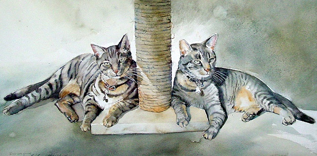 My Tabbies: Max and Cooper