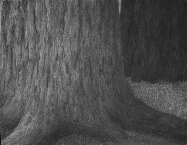 katherine meyer drawing charcoal redwoods california Big Basin