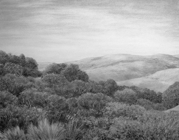 katherine meyer drawing charcoal Tilden san francisco bay
