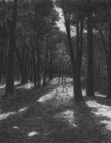 Blithewold ARboretum RI katherine meyer artist charcoal drawing