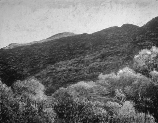 Katherine Meyer charcoal drawing Dorland Mountain